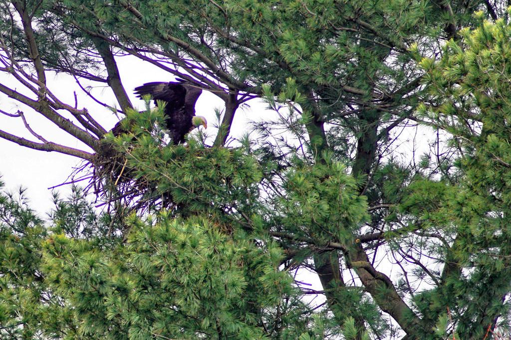 Cannonsburgh Eagles DeBar 2rs