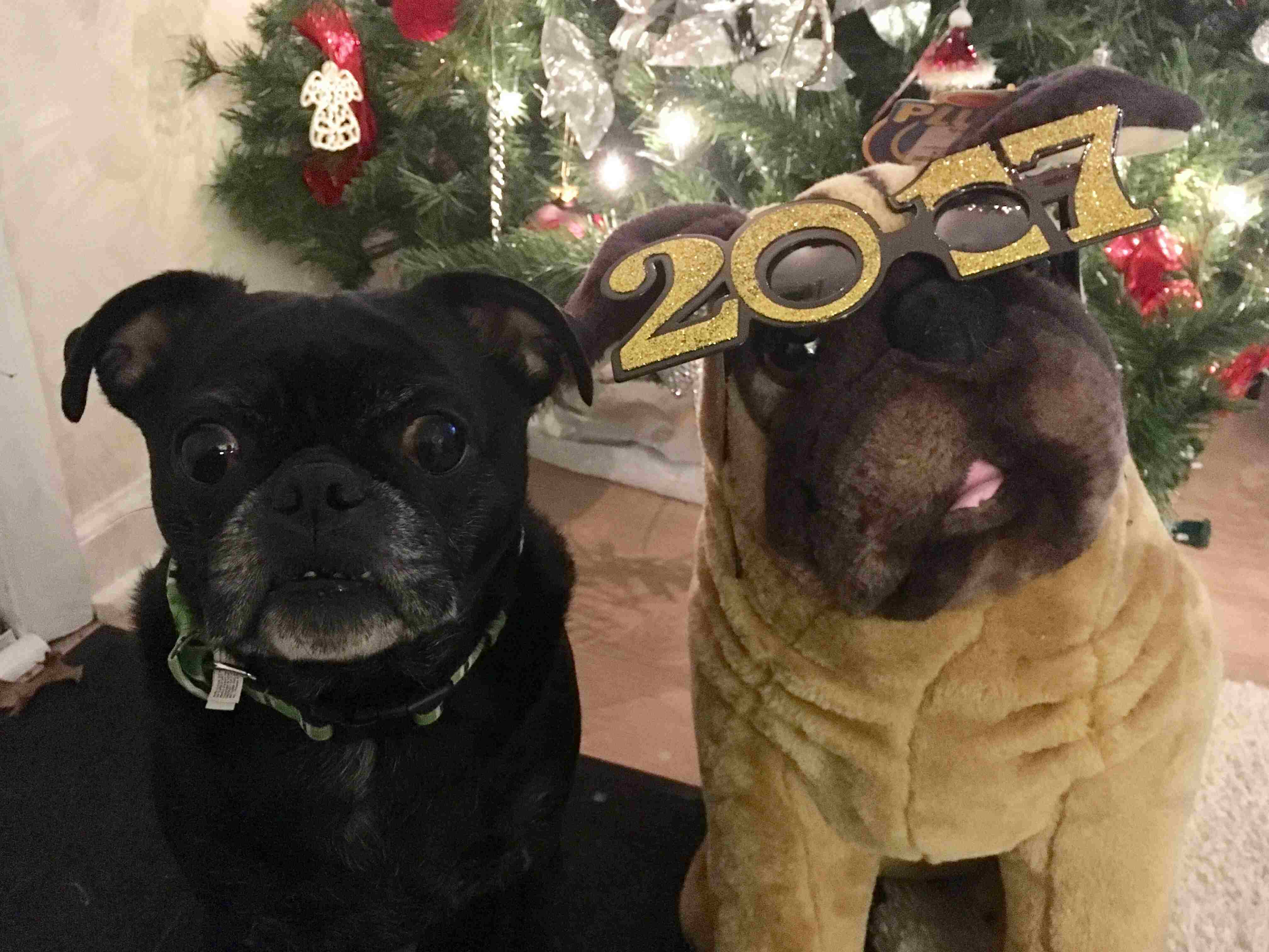 dogs-2017-b