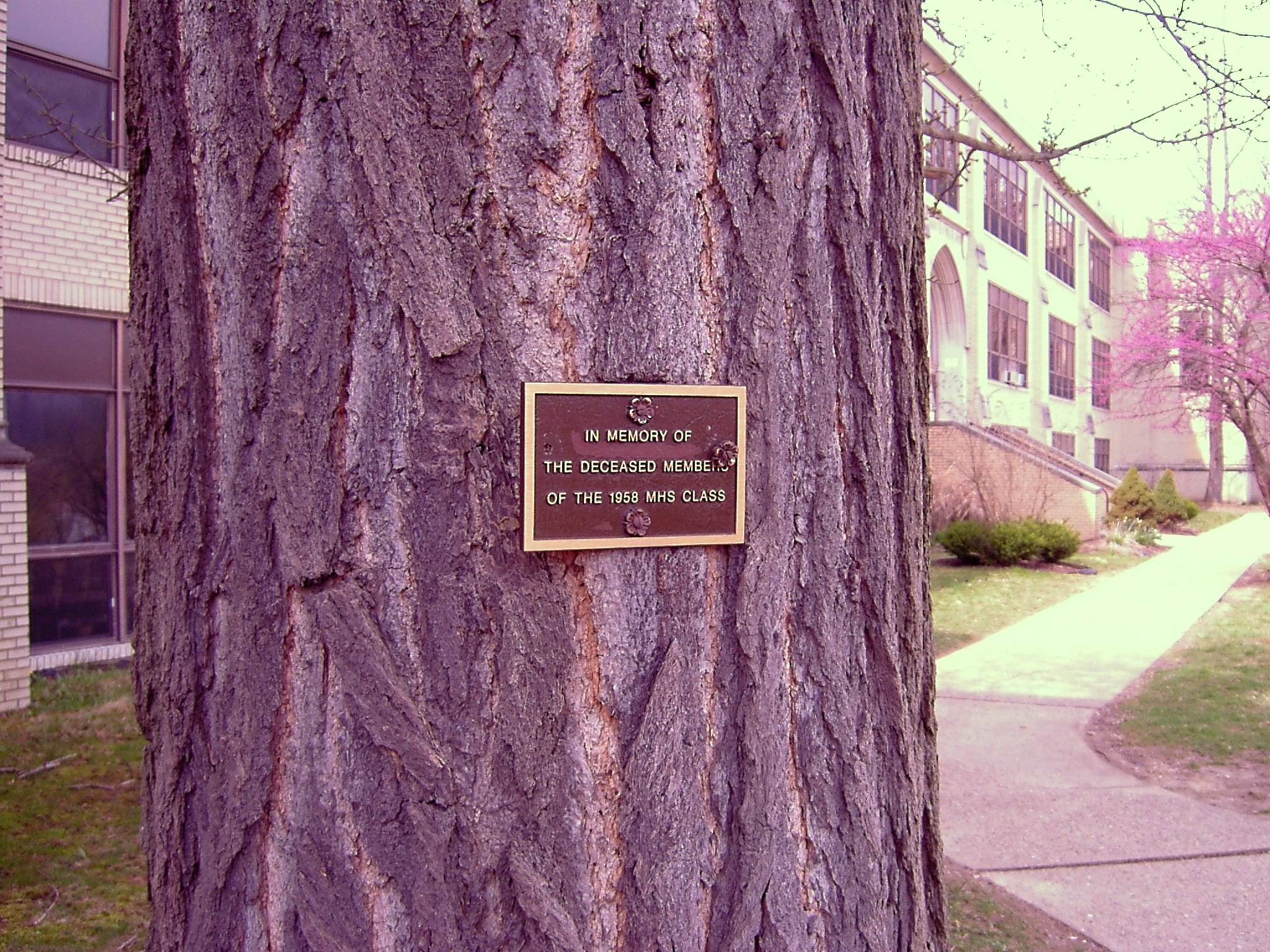 Tree-Small plaque
